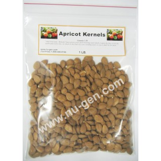 Premium Raw Apricot Kernels - Extremely Bitter 1 Lb Bag - approx. 750 raw bitter kernels